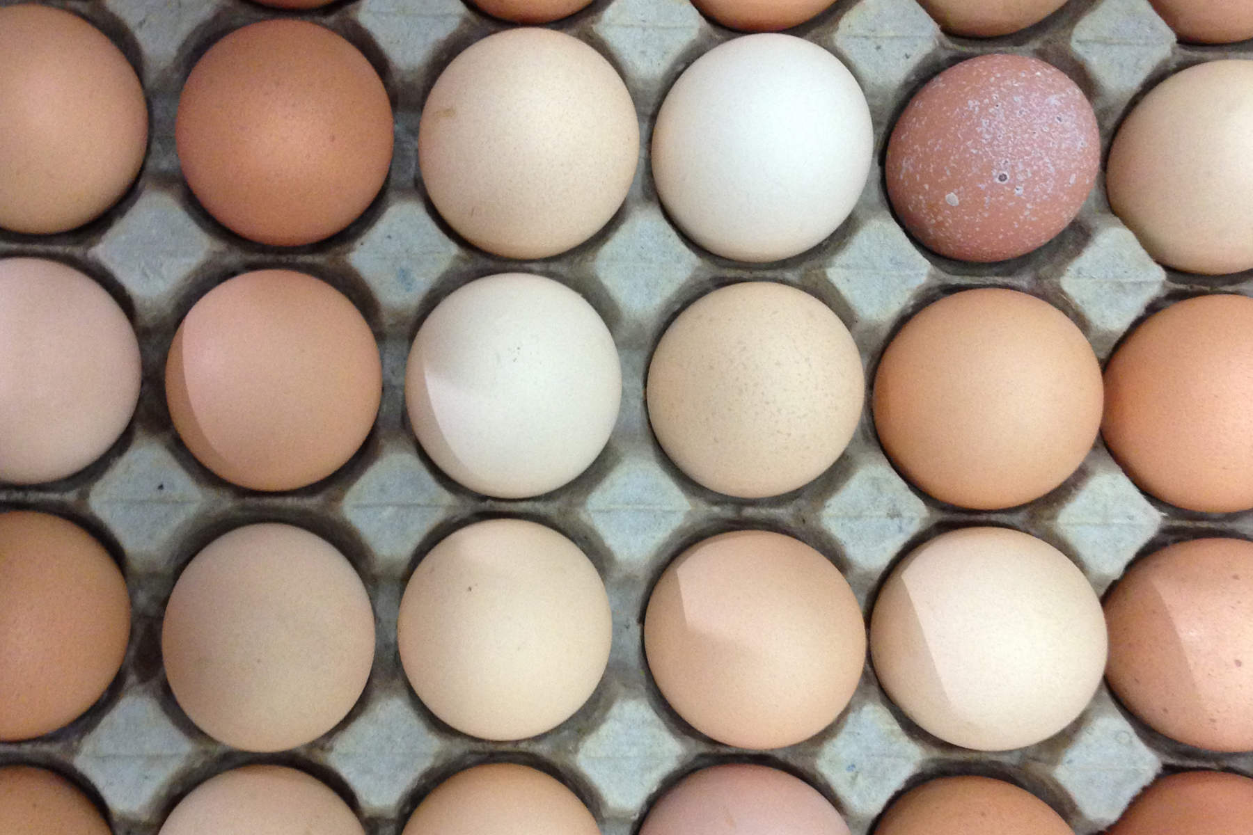 Local, Pasture-Raised Eggs